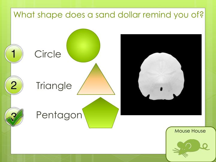What shape does a sand dollar remind you of?