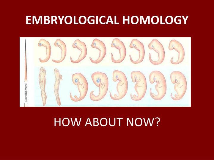 EMBRYOLOGICAL HOMOLOGY