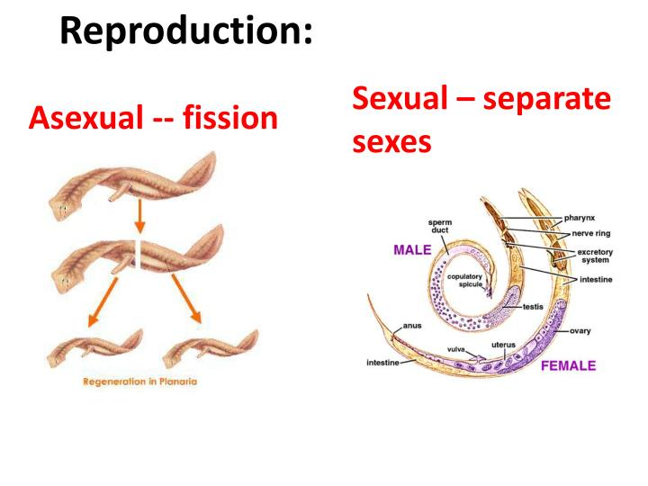 Reproduction: