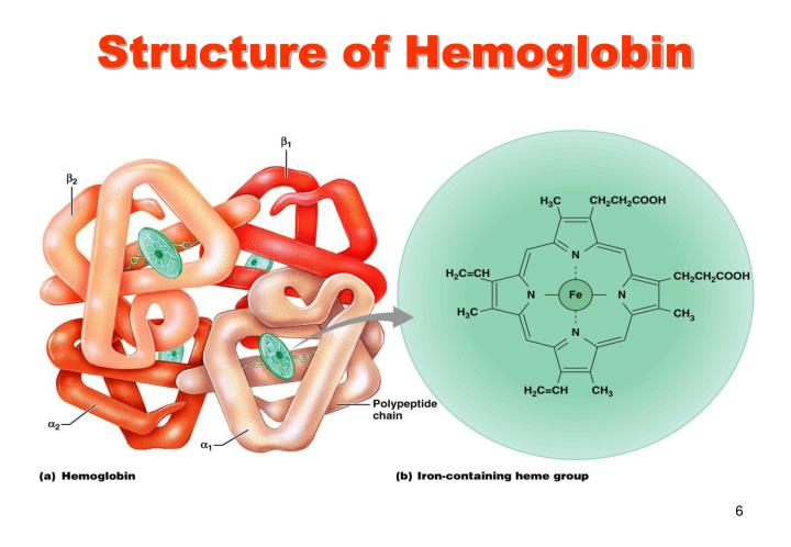 Hemoglobin on blood circulatory system ppt