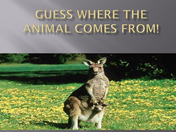 Guess where the animal comes from!