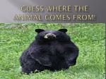 guess where the animal comes from1