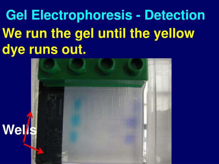 Gel Electrophoresis - Detection