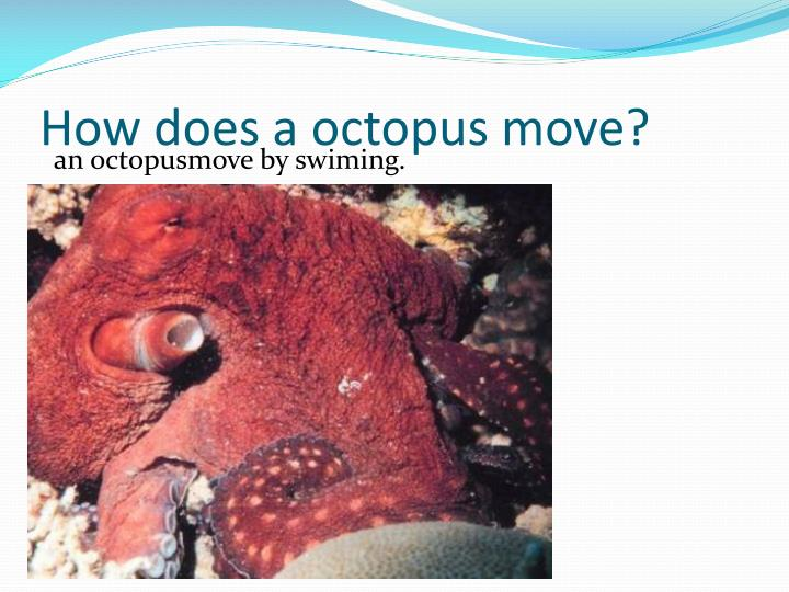 How does a octopus move?