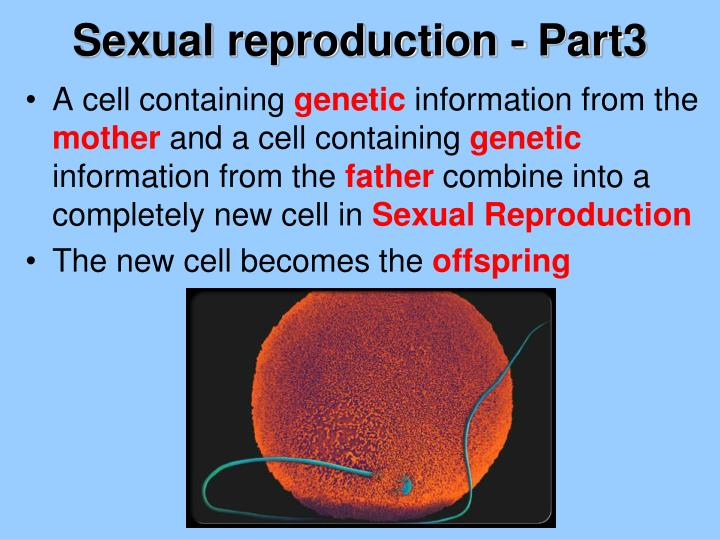 Sexual reproduction - Part3