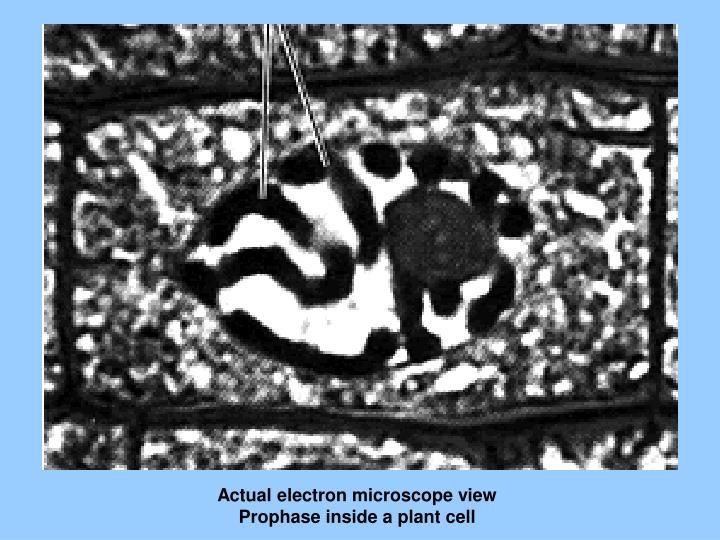 Actual electron microscope view