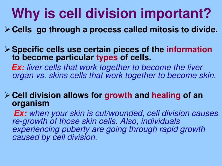 Why is cell division important?