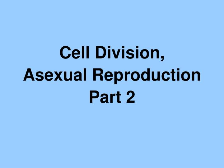 Cell Division,