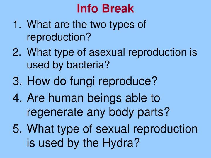 Info Break