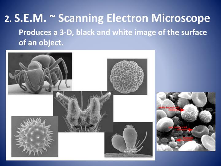 Produces a 3-D, black and white image of the surface of an object.