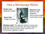 how a microscope works1