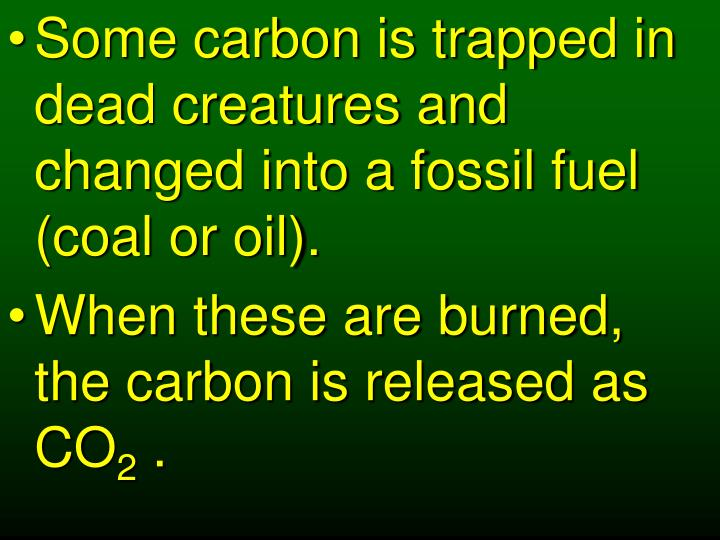 Some carbon is trapped in dead creatures and changed into a fossil fuel (coal or oil).