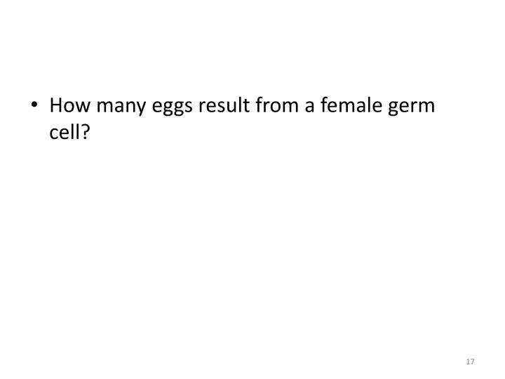 How many eggs result from a female germ cell?