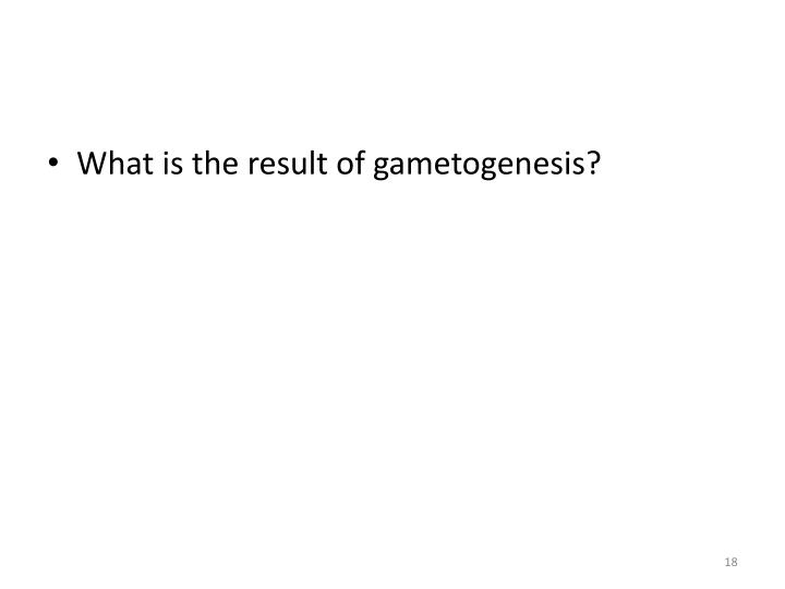 What is the result of gametogenesis?
