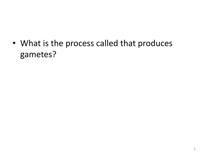 What is the process called that produces gametes?