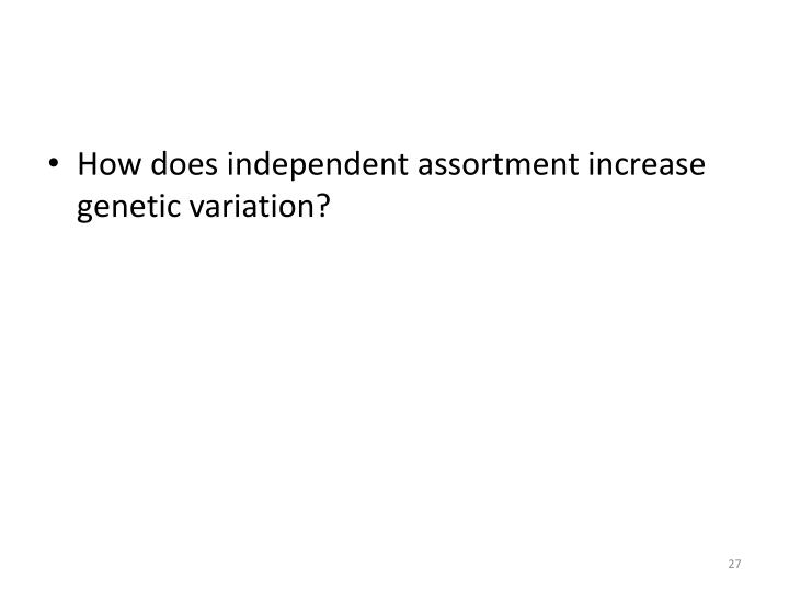 How does independent assortment increase genetic variation?