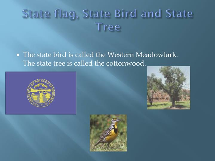State flag, State Bird and State Tree