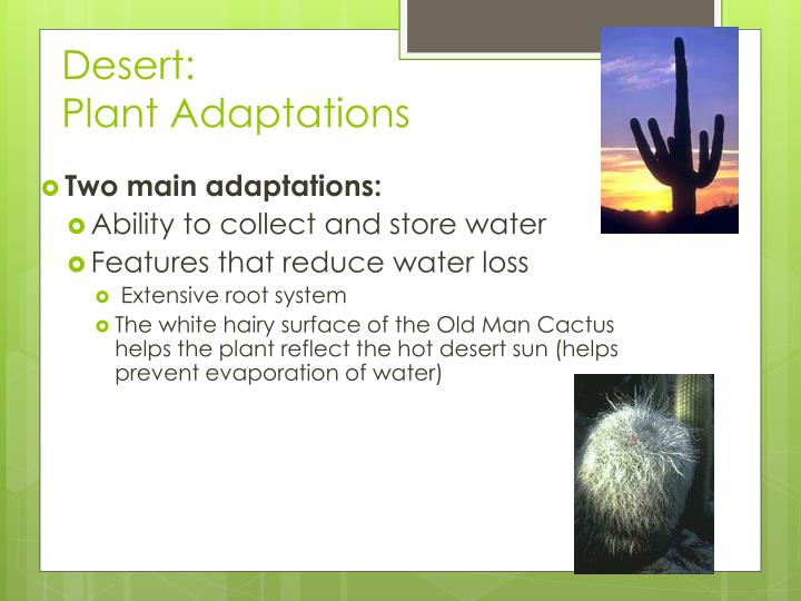 PPT - Biome Adaptations & Niches PowerPoint Presentation ...