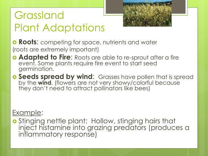 grassland plants adaptations