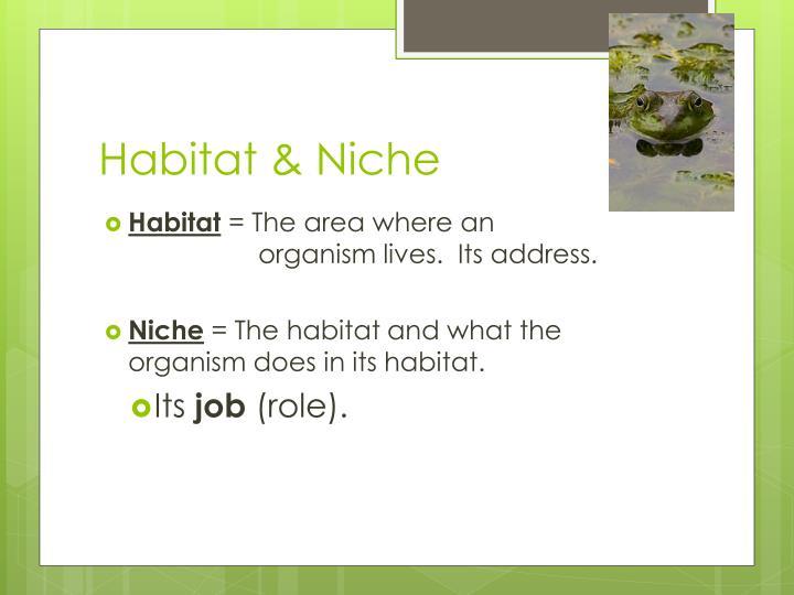 Habitat & Niche