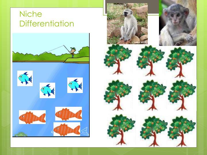 Niche Differentiation