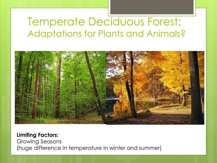 Temperate Deciduous Forest: