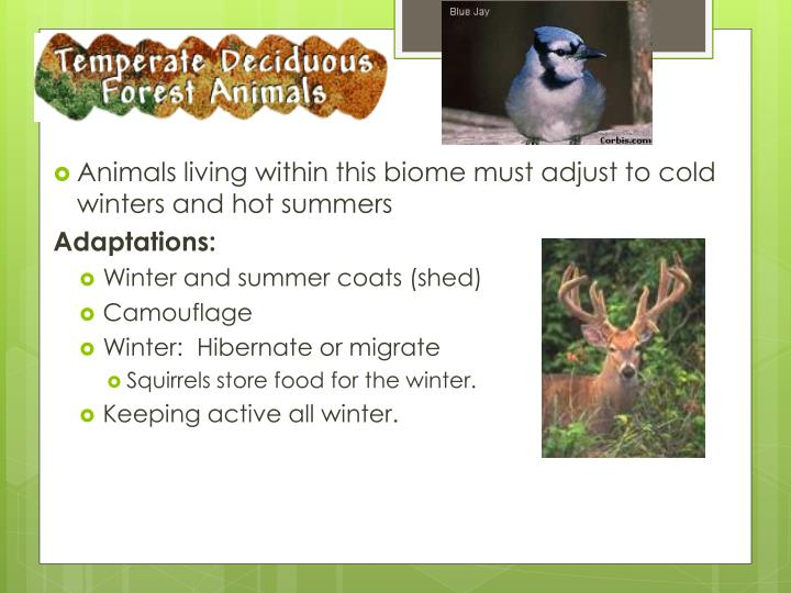 Animals living within this biome must adjust to cold winters and hot summers