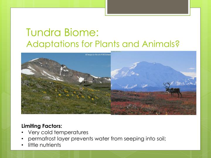 Tundra Biome: