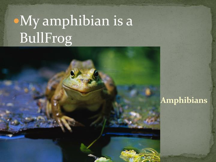 My amphibian is a