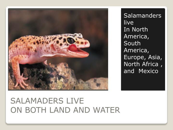 Salamanders  live