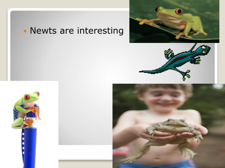 Newts are interesting