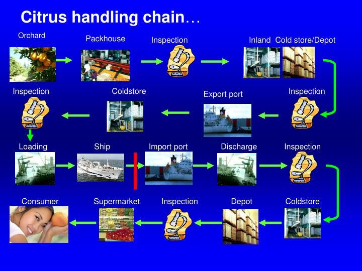 Citrus handling chain
