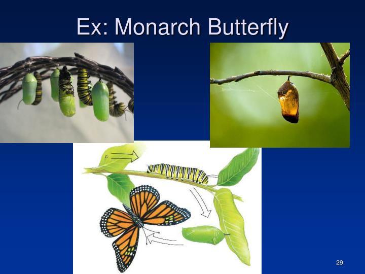 Ex: Monarch Butterfly