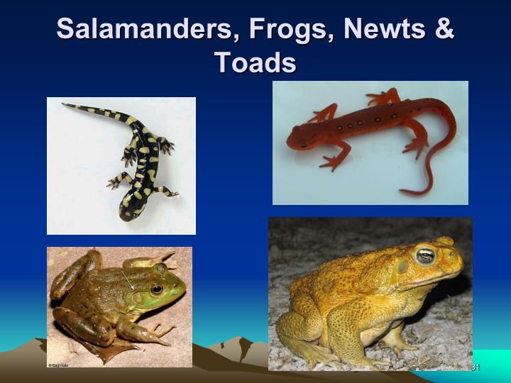 Salamanders, Frogs, Newts & Toads
