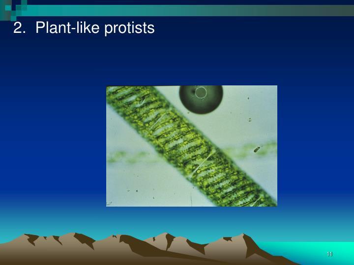 2.  Plant-like protists