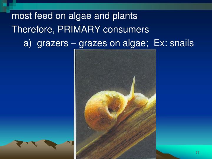 most feed on algae and plants