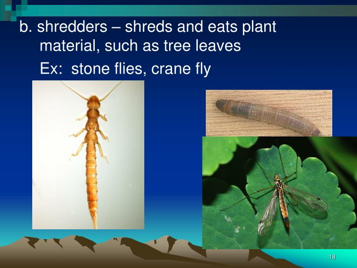 b. shredders – shreds and eats plant material, such as tree leaves