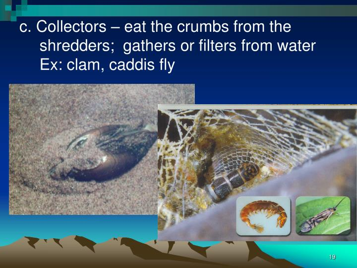 c. Collectors – eat the crumbs from the shredders;  gathers or filters from water Ex: clam, caddis fly