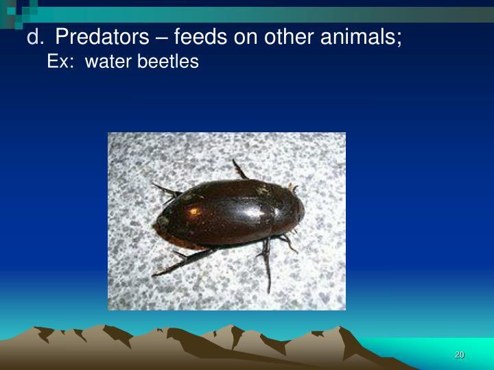 Predators – feeds on other animals;