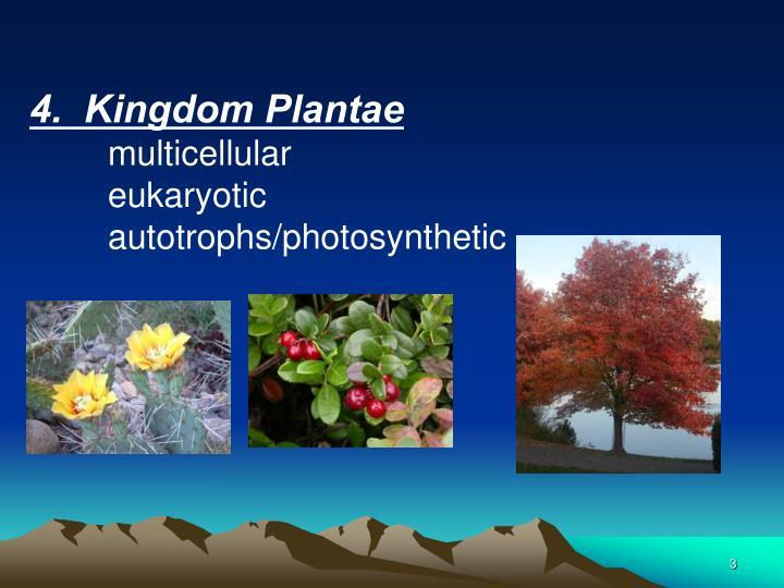 4.  Kingdom Plantae