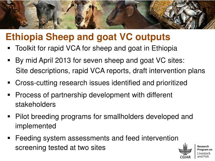 Ethiopia Sheep and goat VC outputs