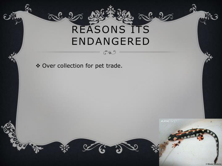 Reasons its endangered