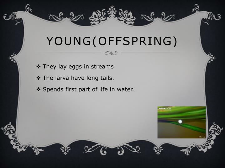 Young(offspring)