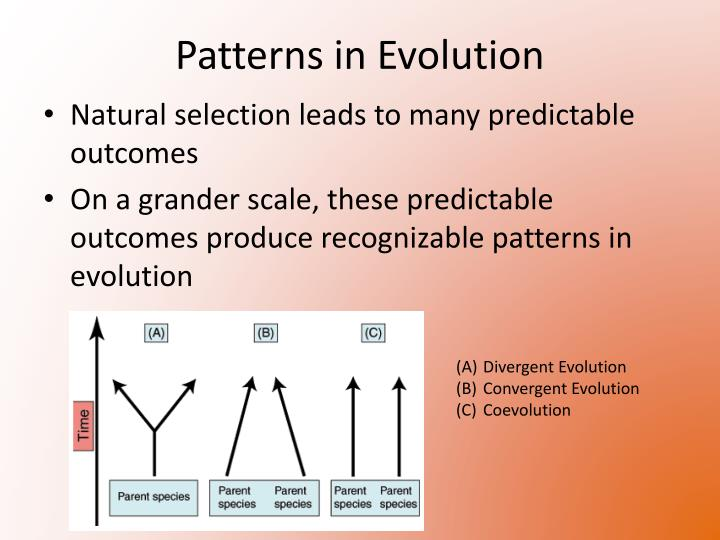 Patterns in evolution