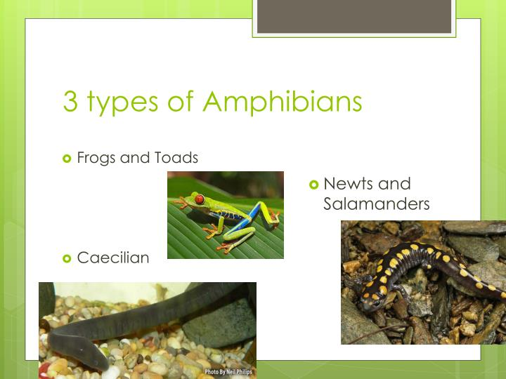 3 types of Amphibians