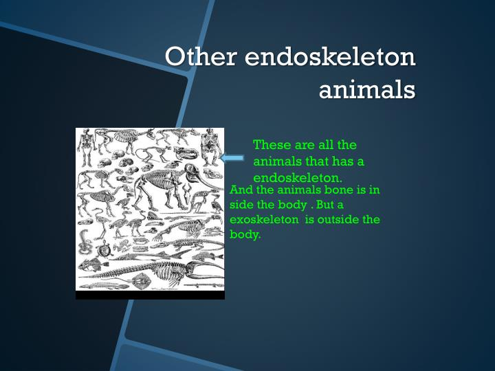 Other endoskeleton animals