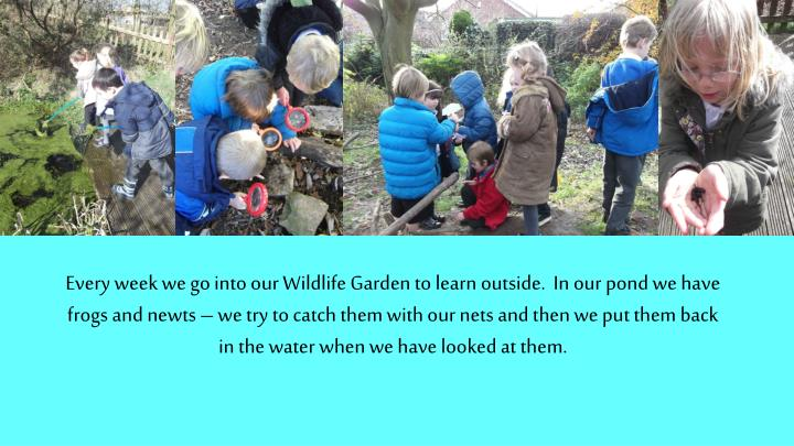 Every week we go into our Wildlife Garden to learn outside.  In our pond we have frogs and newts – we try to catch them with our nets and then we put them back in the water when we have looked at them.