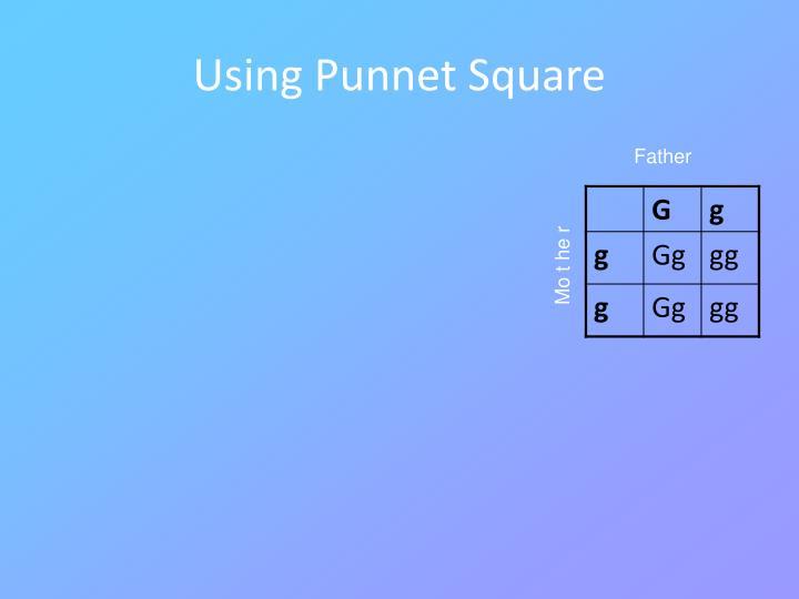 Using Punnet Square