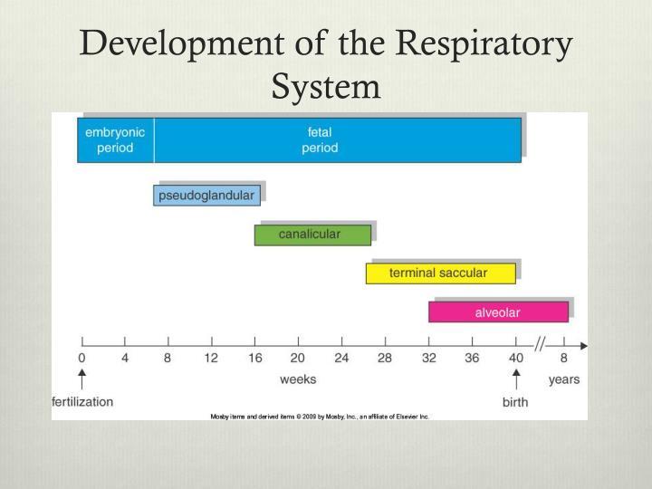 Development of the Respiratory System