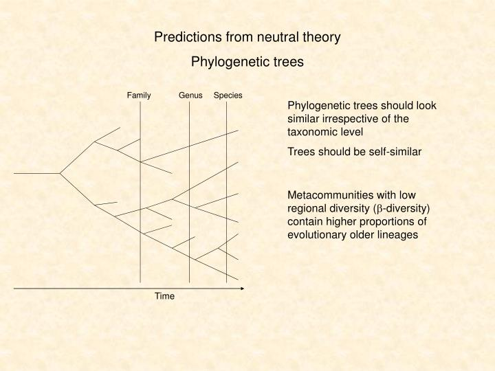 Predictions from neutral theory
